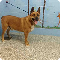 Adopt A Pet :: URGENT on 1/17 SAN BERNARDINO - San Bernardino, CA