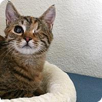 Adopt A Pet :: Angelou VALENTINE'S SPECIAL! 5 - Republic, WA