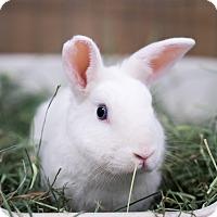 Adopt A Pet :: Casper - Montclair, CA