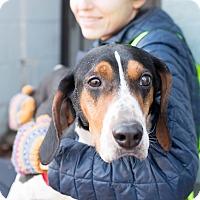 Adopt A Pet :: Stryker - Washington, DC