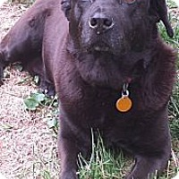 Adopt A Pet :: Blackie - Nashville, TN