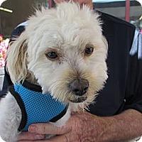 Adopt A Pet :: Lambert - Ft. Bragg, CA