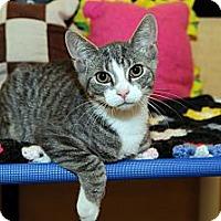 Adopt A Pet :: Cameron - Farmingdale, NY