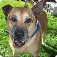 Adopt A Pet :: Cheech & Chong - Scottsdale, AZ