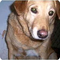 Adopt A Pet :: Jane - Scottsdale, AZ