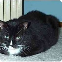 Adopt A Pet :: Butch - Acme, PA