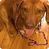 Adopt A Pet :: Bobo - Freeport, NY