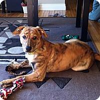 Adopt A Pet :: Peanut - Saskatoon, SK