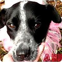 Adopt A Pet :: Abbie - Orlando, FL