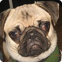 Adopt A Pet :: Wallace-NJ - Mays Landing, NJ