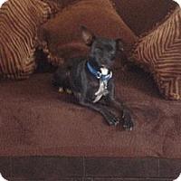Adopt A Pet :: Zen - selden, NY