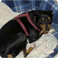 Adopt A Pet :: Precious - Alliance, OH
