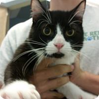 Adopt A Pet :: Snaps - Higley, AZ