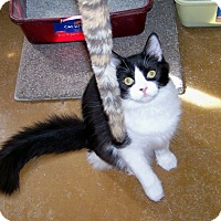 Adopt A Pet :: Erin - Scottsdale, AZ