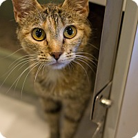 Adopt A Pet :: Vanilla - Lincoln, NE