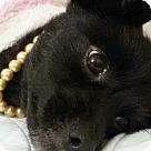 Adopt A Pet :: Isadora