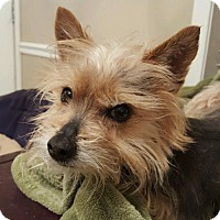 Adopt A Pet :: Rico - Conway, AR