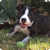 Adopt A Pet :: Basco - Austin, TX