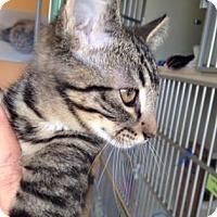 Adopt A Pet :: Glenn - Fort Collins, CO