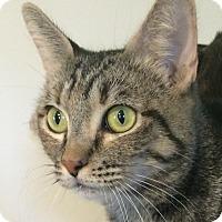 Adopt A Pet :: Jinxy - Winchester, CA