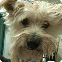 Adopt A Pet :: LEO - Murray, UT