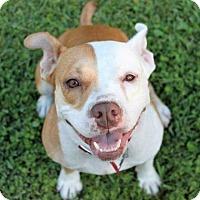 Adopt A Pet :: Gia - Ocala, FL