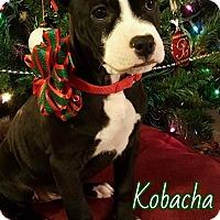 Adopt A Pet :: Kobacha - Toledo, OH