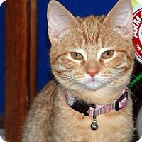 Adopt A Pet :: Breezy - Alameda, CA
