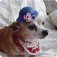 Adopt A Pet :: Lola - Grove City, OH