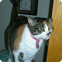 Adopt A Pet :: Venus - Reston, VA