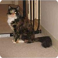 Adopt A Pet :: Elektra - Summerville, SC