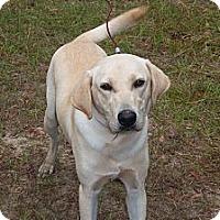 Adopt A Pet :: Buddy Y - Cumming, GA