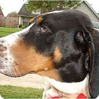Adopt A Pet :: Kristina - Houston, TX