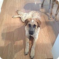 Adopt A Pet :: Khloe - Saskatoon, SK