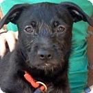 Adopt A Pet :: TYRIAN (video)