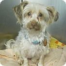 Adopt A Pet :: Hula