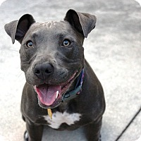 Adopt A Pet :: Rue - Ft. Myers, FL