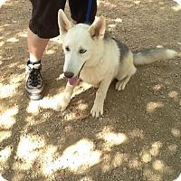Adopt A Pet :: Kaden - Phoenix, AZ