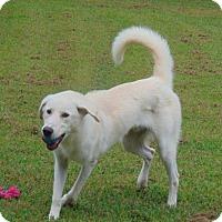 Adopt A Pet :: Abel - Lufkin, TX
