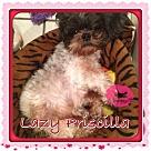 Adopt A Pet :: Priscilla