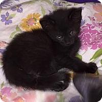 Adopt A Pet :: Minnie - Putnam, CT