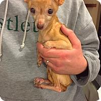 Adopt A Pet :: Rue - Long Beach, NY