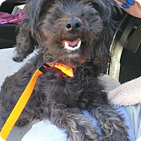 Adopt A Pet :: Gina-Adoption Pending - Boulder, CO