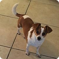 Adopt A Pet :: Princess - Las Vegas, NV