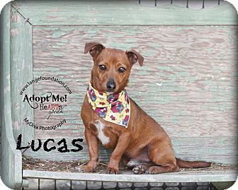 Dachshund Mix Dog for adoption in Canyon Country, California - Lucas