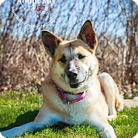 Adopt A Pet :: Gracie - Enfield, CT