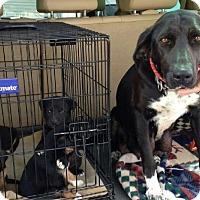 Adopt A Pet :: Casey - Meridian, ID