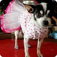Adopt A Pet :: Gwen - Gilbert, AZ