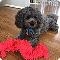 Adopt A Pet :: Harry Somu - Houston, TX