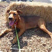 Adopt A Pet :: BONNIE - McKinleyville, CA